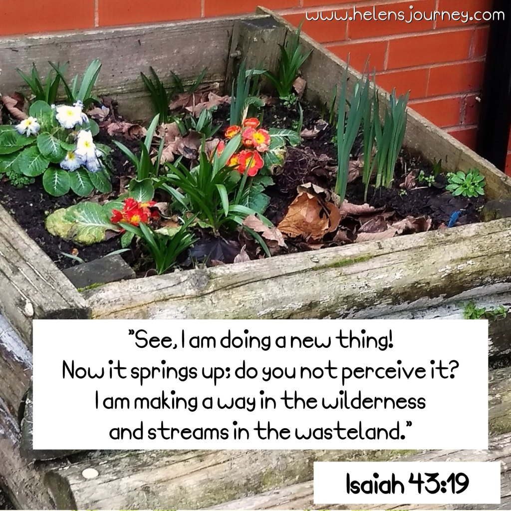 A bible verse that goes with my message that springtime has about renewed hope, new beginnings and life in the wilderness. read the full blog at www.helensjourney.com