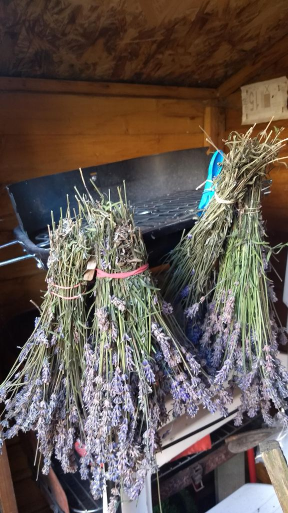 hang lavender upside down in a dark cool place to dry out